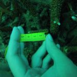 GOPR5993 Branching 1 tag 1