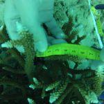 GOPR5995 Branching 1 tag 3