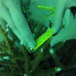 GOPR5998 Branching 1 tag 2