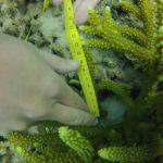 GOPR6021 Branching 2 tag 2