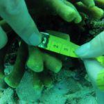 GOPR6036 Branching 3 tag 2