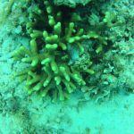 GOPR6041 Branching 3 top